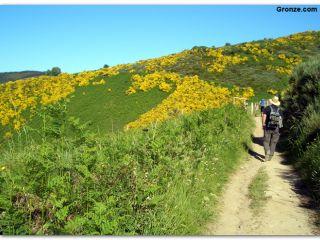 Ascenso a O Cebreiro por el Camino de Santiago