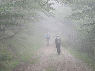 Peregrinos en la niebla