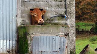 Curioso abrevadero en una granja del lugar de O Campo da Vila