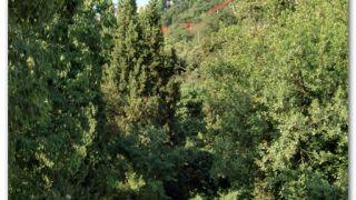 Camino de Can Borni