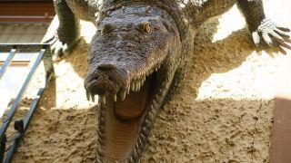 Réplica del cocodrilo del río Sequillo en Medina de Rioseco
