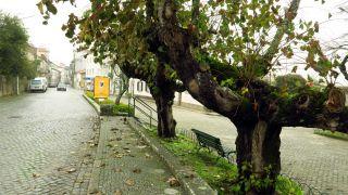 Árboles y adoquines en Fão