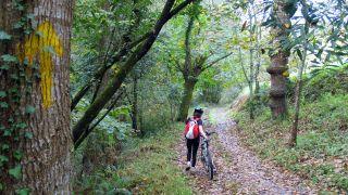 Senda Verde en Asturias, el Camino que todos los peregrinos deseamos