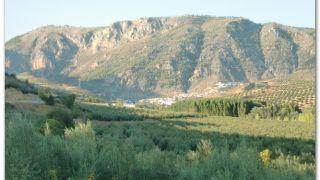 El pueblo de Olivares, al fondo