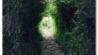 Túnel vegetal, en la entrada de Ostabat