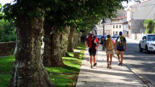 Paseo con plátanos de sombra a la entrada de Chantada