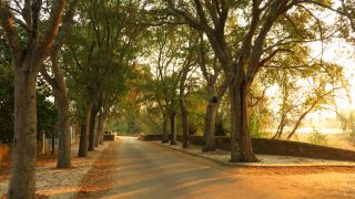 Árboles frente al Tajo en la Quinta da Cardiga