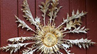 La flor de cardo, Saint-Guilhem-le-Désert
