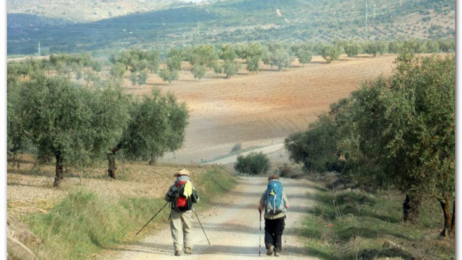 De camino a Villafranca de los Barros