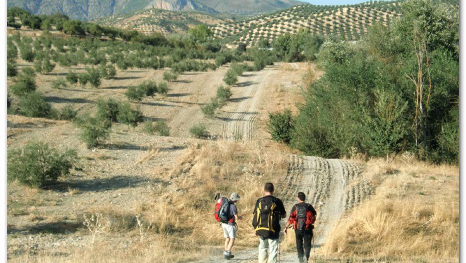 De camino a Olivares (Granada)