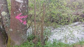Una de las flechas pintada sobre un árbol