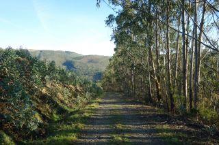 Un tramo por el monte, de la variante de Trabada, entre A Trapa y San Tomé de Lourenzá