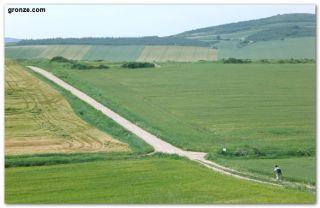 Campos de cereales de camino a Berantevilla
