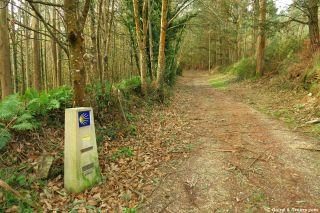 Mojón en el bosque, de camino hacia Mondoñedo