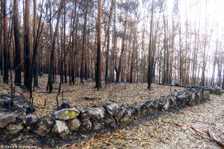 Bosque quemado a pie de camino en A Guarda