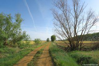 Camino hacia Arenillas de Valderaduey