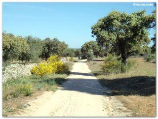 De camino a El Carrascalejo
