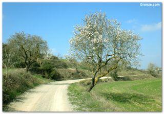 De camino a Cervera (GR 171)