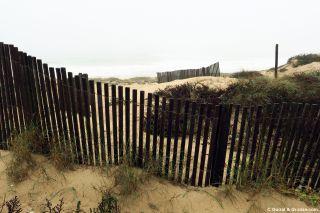 Barreras para fijar las dunas en Aguçadoura