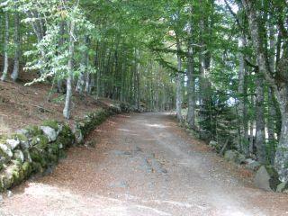 De camino a Aubrac