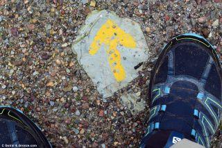 Flechita pintada en el Camino del Sur, a la salida de Aracena