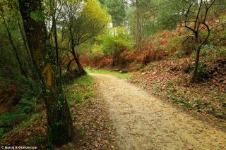 Flecha y camino de tierra cerca de Cedeira