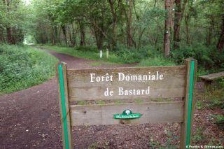Entrada al bosque de Bastard