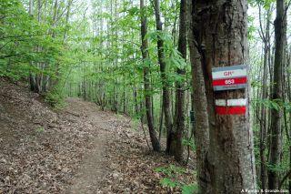 Bosque de castaños, de Saint-Gervais-sur-Mare a Andabre