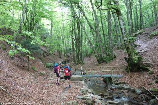 Cruzando el Dourdou en un hayedo, hacia Les Sénausses