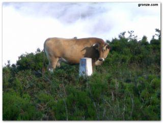 Una vaca observa un mojón de piedra