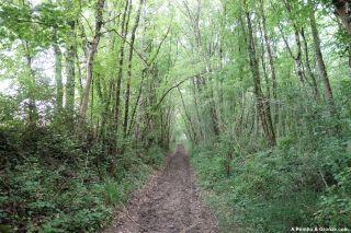 Camino por el bosque, hacia Montesquiou