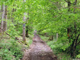 Bosque hacia Le Pin