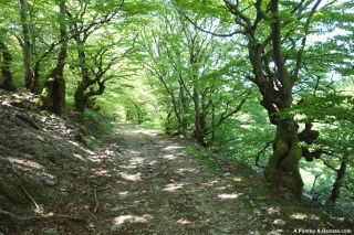 Hayedo, del Col du Liourel al Col du Layrac