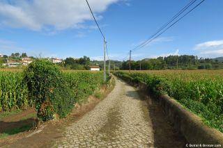 Tramo de calzada adoquinada entre maizales, de camino a Oliveira de Azeméis
