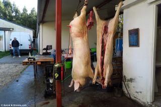 Matanza del cerdo en A Lagoa