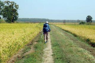 Vía Francígena en la Llanura Padana