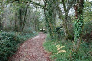 Tramo boscoso del Camino del Norte hacia Lavacolla