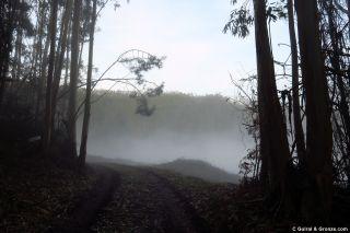 Niebla en un claro del bosque, cerca de Abres