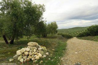 Extensiones de olivos a la salida de Baena