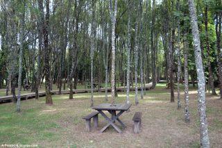 Parque das Nogueiras, Mortágua