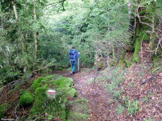 Bosque cruzando el Col de Portet-d'Aspet