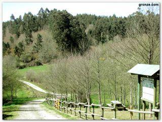 De camino a Ribadiso de Baixo, entre Melide y Arzúa