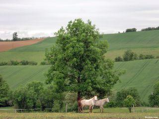 Caballos cerca de Saint-Victor-Rouzaud