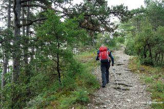 Cuesta empinada por el pinar, salida de Cahors