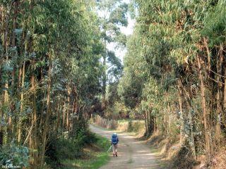 De camino a Santa Eulalia de Carreño