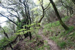 Senda por el bosque, de La Séguinerie al Col des Clarés