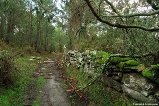 Sendero por el bosque de camino a Baiona