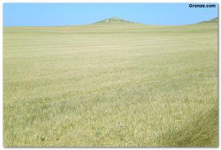 Cultivo de cereales en la Tierra de Campos