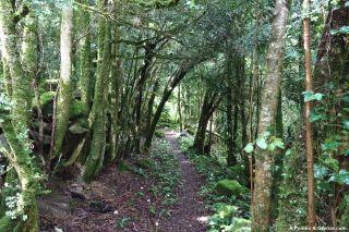 Camino por el valle, a la salida de Urdos