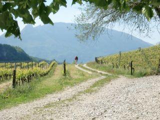 Caminando entre viñedos, hacia Yenne